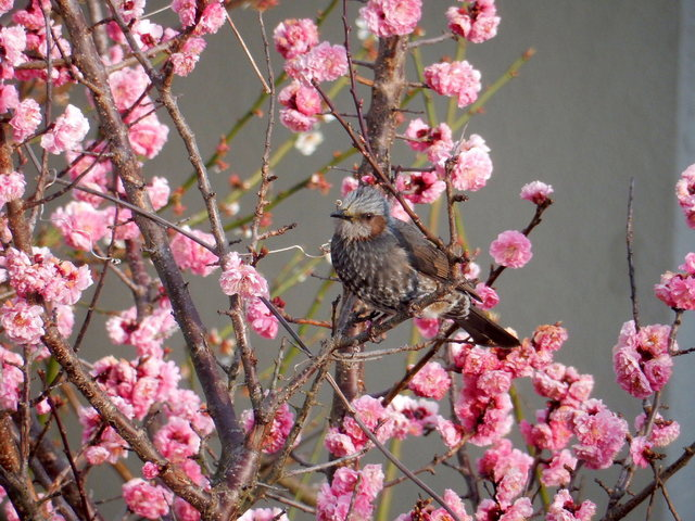 2015.03.29A 23 (6:00から7:30 頃)かんぽの宿・鳥羽.jpg