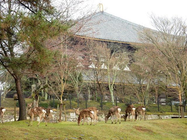 2015.03.29E 16 (16:10から17:30 頃)奈良東大寺.jpg
