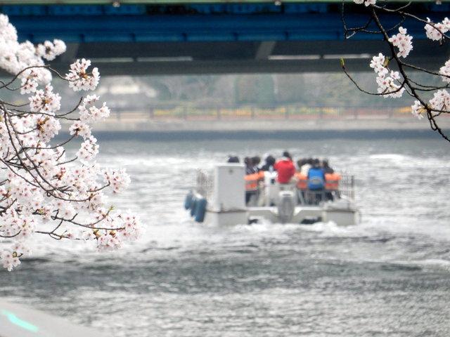 2015.04.01A _20 小名木川・桜.jpg