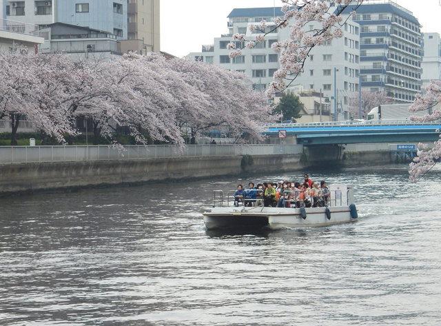 2015.04.01A _16 小名木川・桜.jpg
