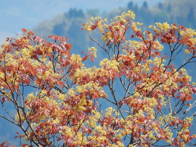 2015.04.28D _37 六万騎山.jpg