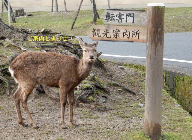 2015.03.29E 04 道案内.jpg