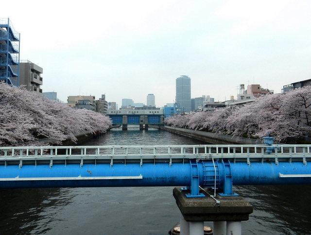2015.04.01A _03 小名木川・桜.jpg