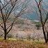 02.11.22 冬桜・鬼石-桜山公園-04.jpg