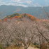 02.11.22 冬桜・鬼石-桜山公園-06.jpg