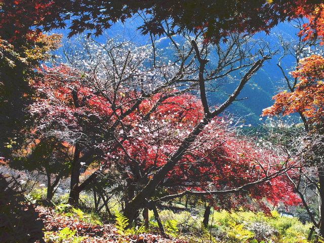 14.11.16 B - 035 鬼石「桜山公園」.jpg