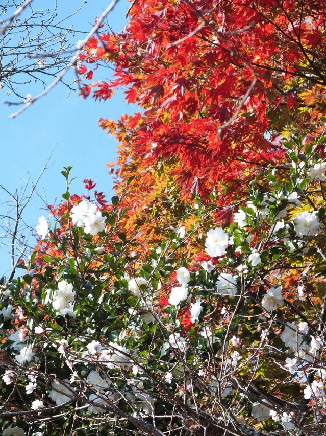 14.11.16 B - 063 鬼石「桜山公園」.jpg