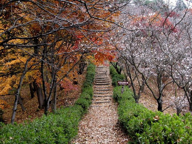 02.11.22 冬桜・鬼石-桜山公園-00.jpg