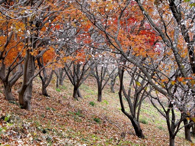 02.11.22 冬桜・鬼石-桜山公園-02.jpg