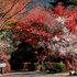 2012.11.20B -  034 城峯山公園.JPG