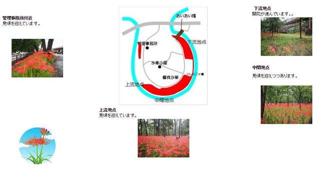 2016.09.24 巾着田.JPG