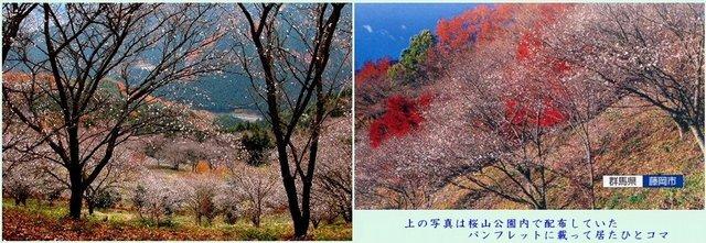 鬼石・冬桜 (1280×340).jpg