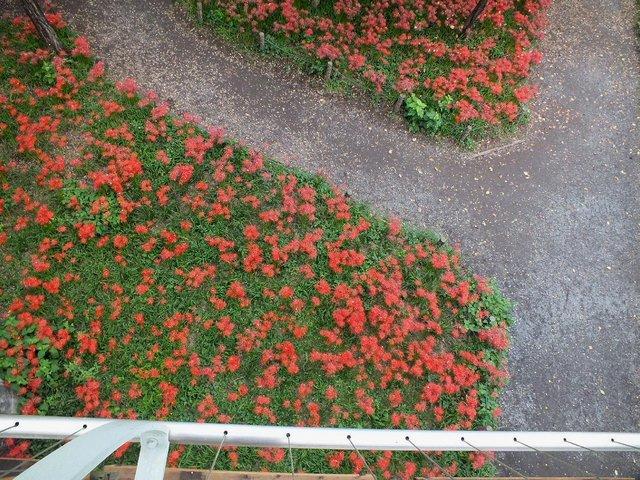 2016.09.30 A 043 【巾着田】 遅咲きエリア(あいあい橋付近).jpg