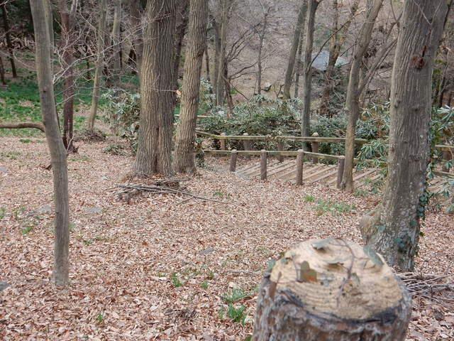 A026 2017.03.07 - 054 三毳山 (カタクリの園・メイン部).jpg