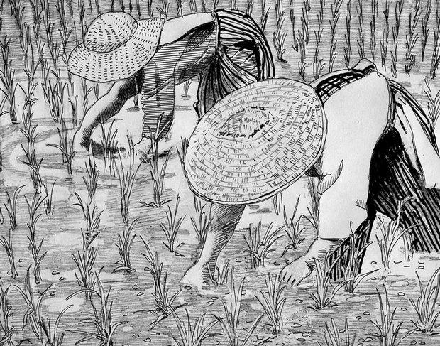田の草取り.jpg