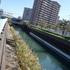 25%東武亀戸線と小原橋を望むDSC00151.jpg