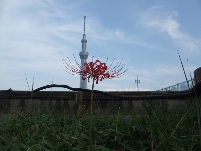 隅田公園DSCF2418.jpg