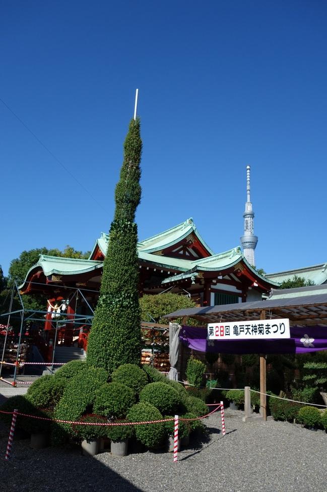 20131027亀戸天神菊祭り.jpg