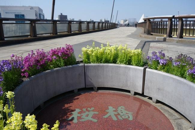墨堤桜橋0316.jpg