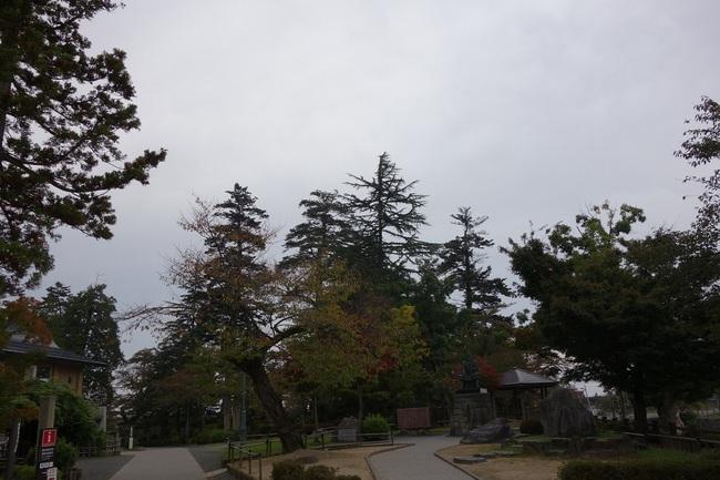 モミの木は残った20141013.jpg