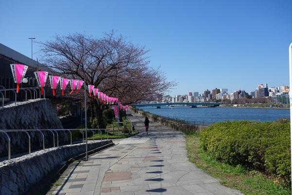 20150326墨堤桜橋から下流.jpg