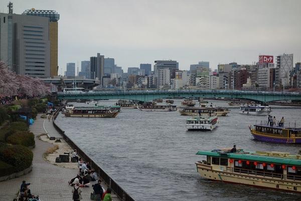 20150329墨堤桜橋から下流.jpg