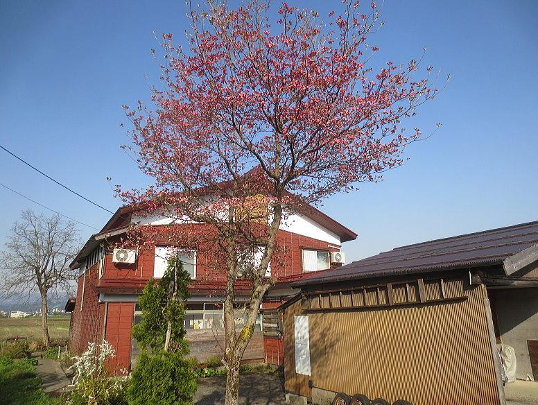 http://hakkaisan-photo.com/tomomiti/2014/05/04/h26-5-4/H26-5-4%E6%96%B0%E5%A0%80%E6%96%B0%E7%94%B0%E8%8A%B1%E6%B0%B4%E6%9C%A821.jpg