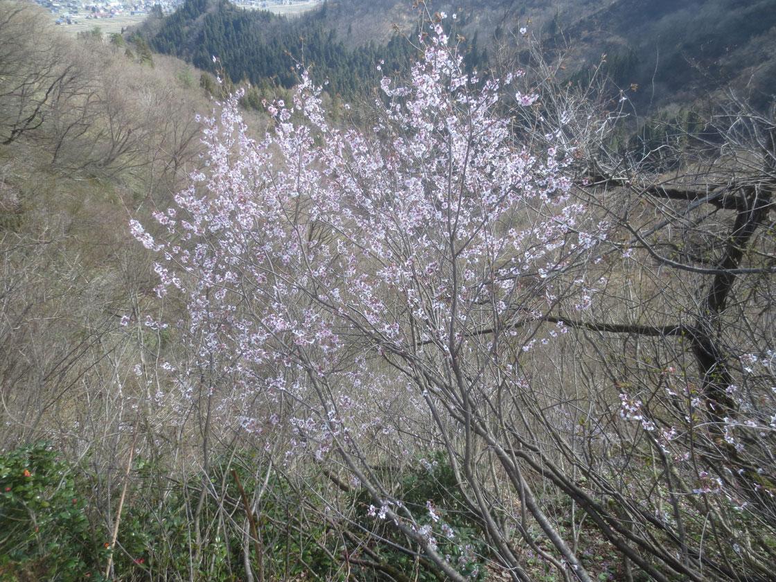 http://hakkaisan-photo.com/tomomiti/2016/04/08/h28-4-5/5-IMG_2065.jpg