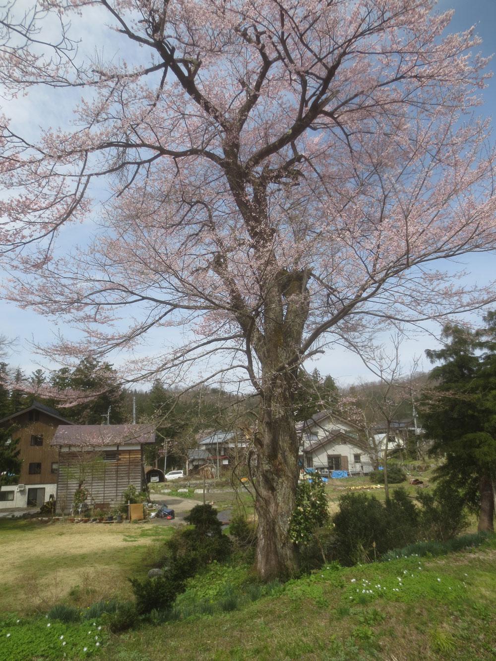 http://hakkaisan-photo.com/tomomiti/2016/04/10/h28-4-9/IMG_2160.jpg