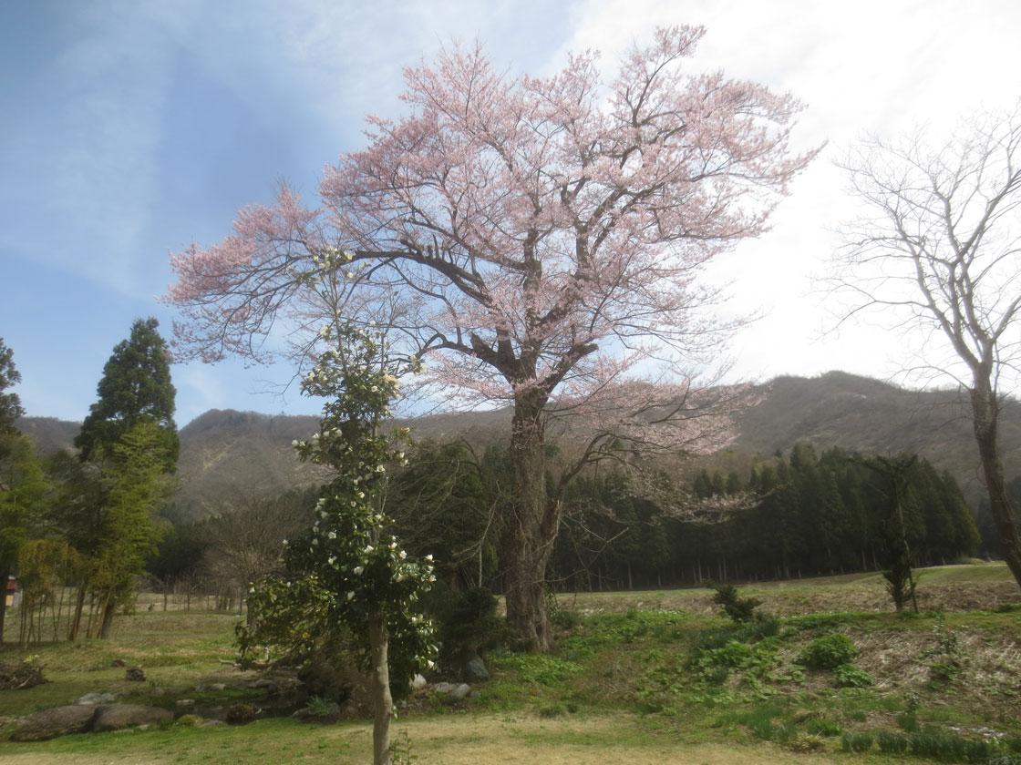 http://hakkaisan-photo.com/tomomiti/2016/04/10/h28-4-9/IMG_2161.jpg