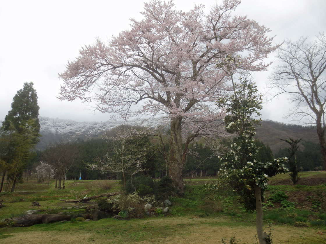 http://hakkaisan-photo.com/tomomiti/2016/04/12/h28-4-11/IMG_2223.jpg