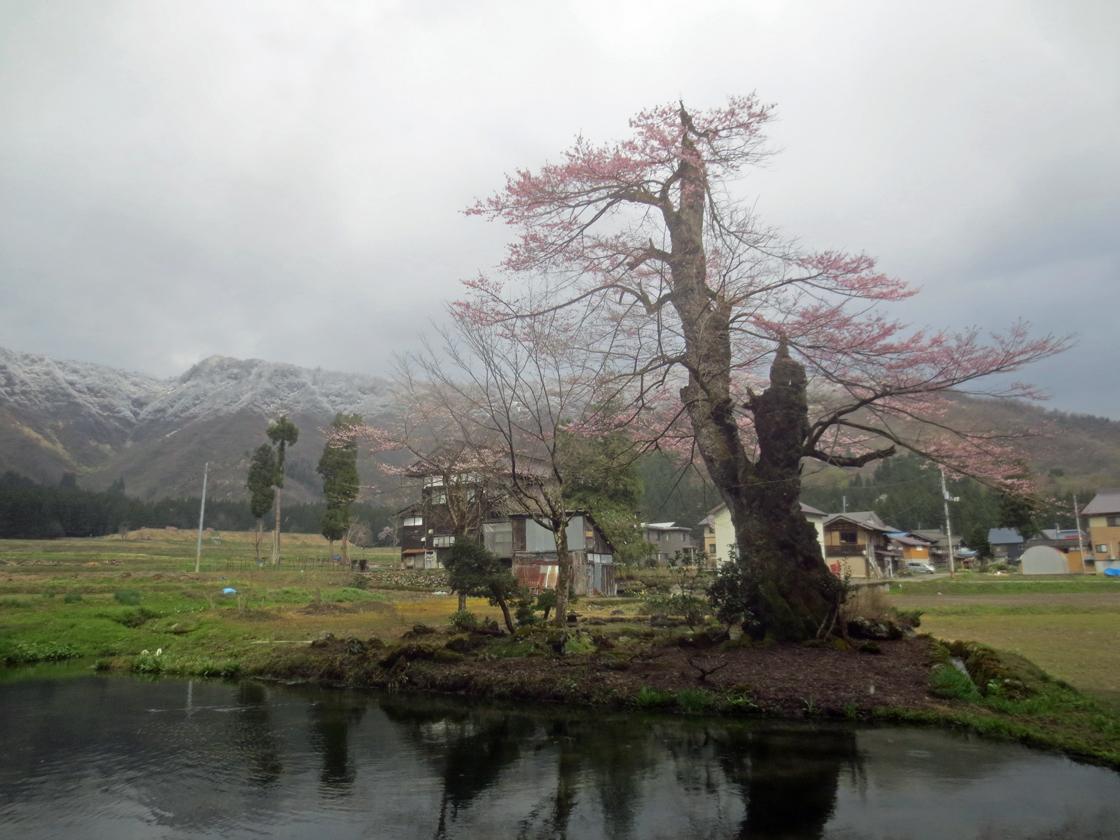 http://hakkaisan-photo.com/tomomiti/2016/04/12/h28-4-11/IMG_2265.jpg