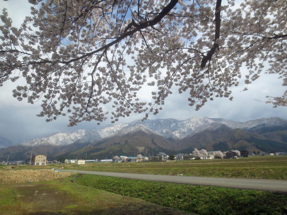http://hakkaisan-photo.com/tomomiti/2016/04/12/h28-4-11/IMG_2284.jpg