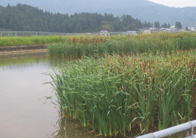 H25-9-21貯水池田崎.jpg