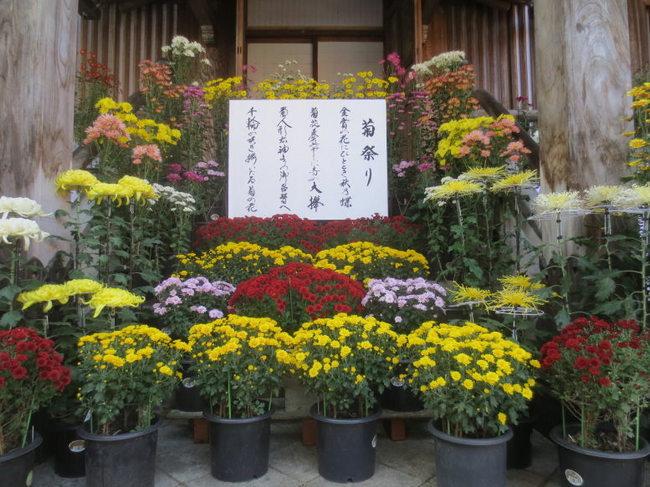 H25-11-3浦佐菊祭4.jpg