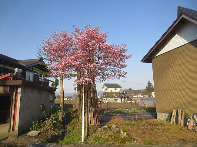 H26-5-4新堀新田花水木1-1.jpg