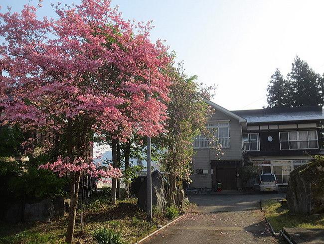H26-5-4新堀新田花水木11.jpg