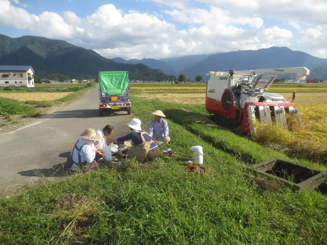 H26-9-21稲刈り風景3-1.jpg