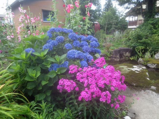 10庭池の青とピンクIMG_3605.JPG