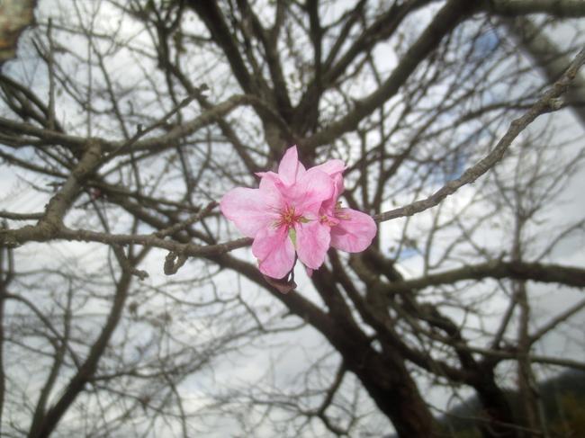 H28-10-27二度咲き2.jpg