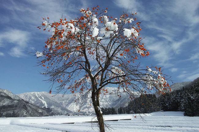 H28-12-12初雪4.JPG