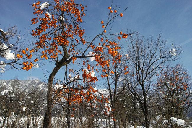 H28-12-12初雪8.JPG