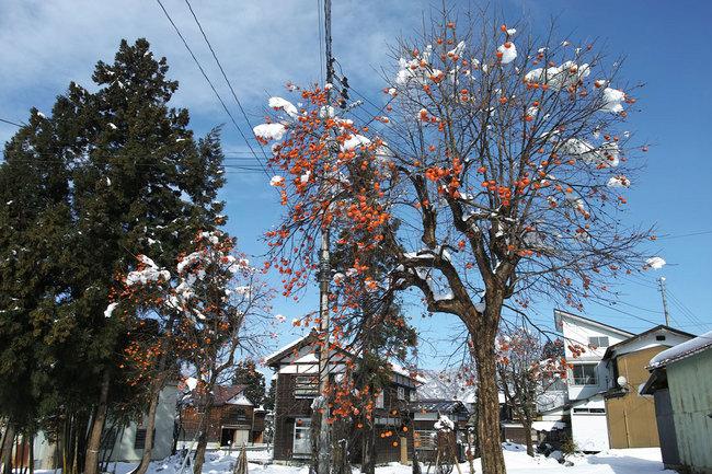 H28-12-12初雪2.JPG