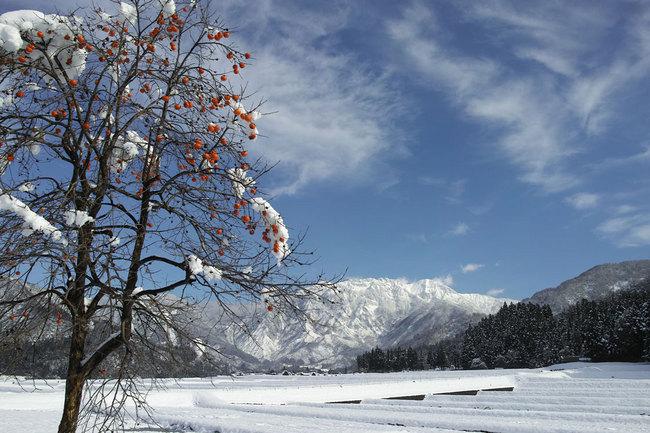 H28-12-12初雪3.JPG