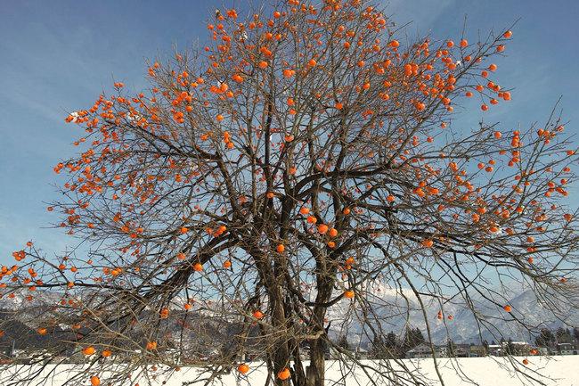 H28-12-12初雪9.JPG