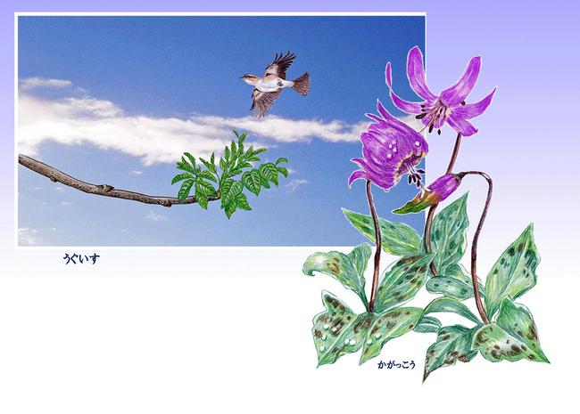 鶯とカタクリ.jpg